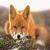 Foxes Club