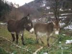 Ânesse et bébé - Donkey