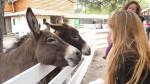 Phoenix et moi - Male Donkey