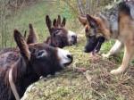 Unknown - Donkey