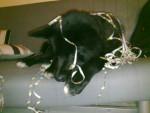 Koda - Male Dog (2 years)