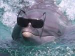 yea - Dolphin