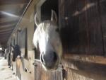 Uthopi - Male Horse