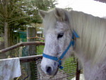 Darling - Male Horse (19 years)